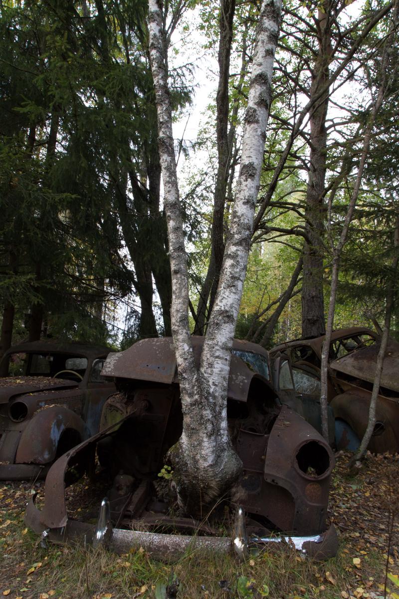 Båstnäs, Revisited 4